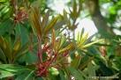 6/41 Oleander