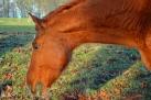 21/4 Pferde