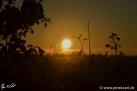 12/12 Sonne